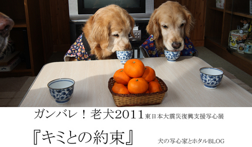 2011bana-1.jpg